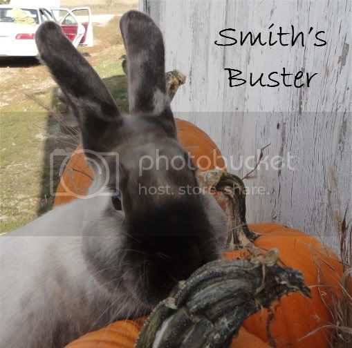 http://i856.photobucket.com/albums/ab126/melsmith2010/Rabbits/SmithsBusterFace.jpg
